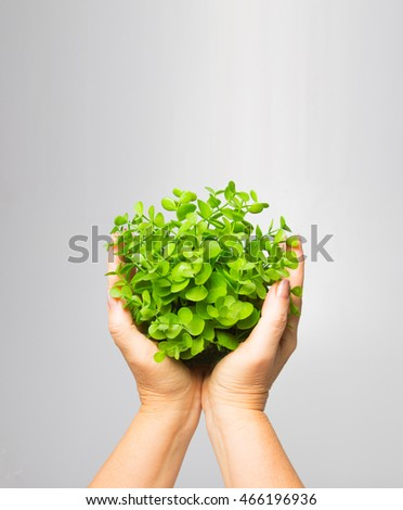 The female hand holding new green sprout