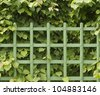 The fence of the shrubs linden and picket, seamless, horizontal - stock photo