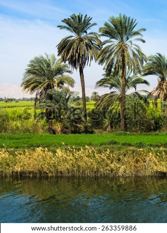 The fertile banks of the Nile. Valley of the Nile River in Egypt. Palms and fields on Nile riverside.