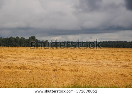 the field after the harvest with thunderclouds
