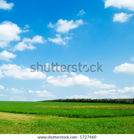 The field and blue sky. - stock photo