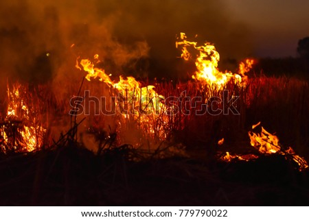 The fire burns rice straw and hay in the field at night. In Northeastern Thailand Southeast Asia