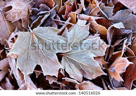 The first autumn frost on the fallen leaves in the park. - stock photo