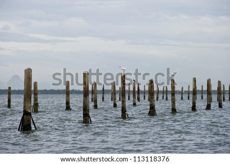 The flog of Great Egret, inner gulf of Thai.Thailand - stock photo