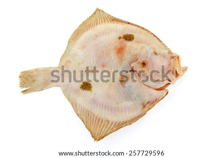 The flounder isolated on a white background - stock photo