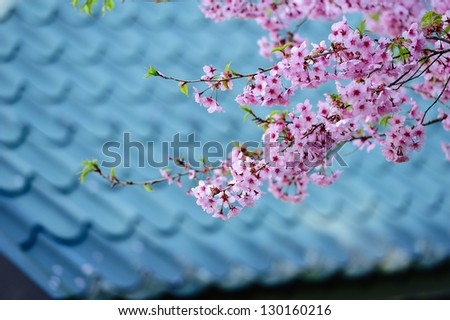 the flower of spring - stock photo