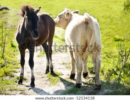 The foal  of a wild horse with the calf wild aurochs - stock photo