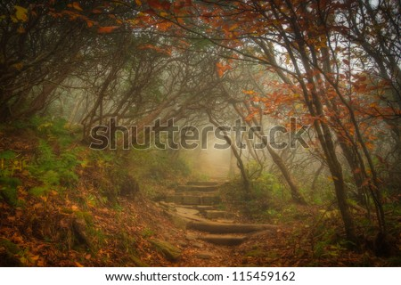 The fog settled in on Craggy Garden Trail on an autumn day. All the colors combined with the misty evening gives this scene an eery yet magical feel. - stock photo