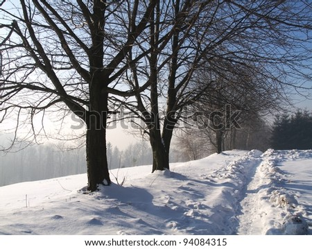 The footpath in forest in winter - stock photo