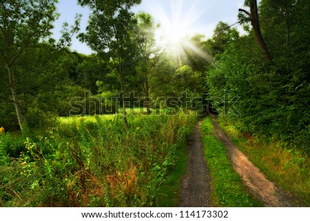 The forest - stock photo