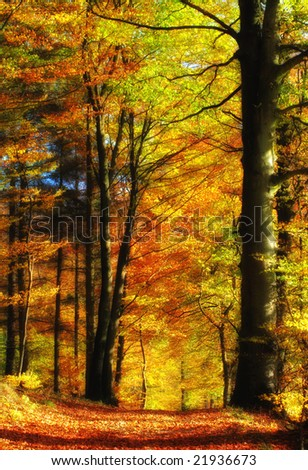 The forest in colorful autumn dress - stock photo