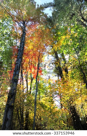The Forest in Fall with Sunburst - stock photo