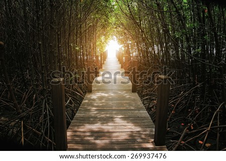 The forest mangrove at Chanthaburi, Thailand - stock photo