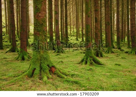 The forest park - stock photo