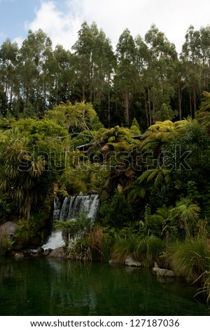 The forests of New Zealand's North Island