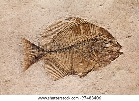 The fossil of a prehistoric fish. - stock photo