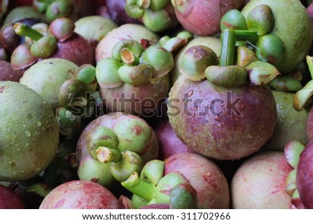 The fresh fruits mangosteen in the fruits garden.