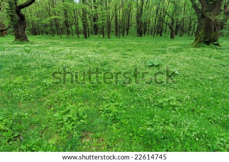 The fresh green and a grassy plain - stock photo