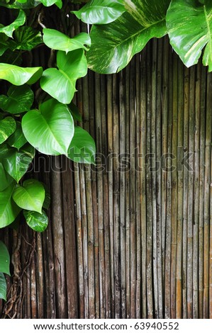 the fresh green climber plants and bamboo stick for design and background - stock photo