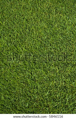 the fresh green grass - stock photo