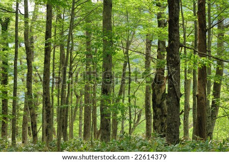 The fresh green to glisten - stock photo
