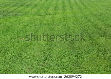 The fresh natural lbackground of awn grass - stock photo