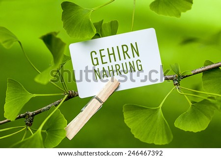 The German Word Gehirnnahrung, translation: brain food  in a Ginkgo Tree - stock photo