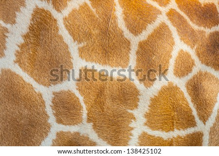 The Giraffe hair texture for background and texture use - stock photo