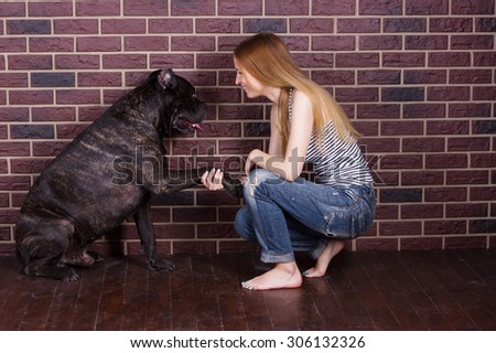 The girl in jeans and a t-shirt Cane Corso dog learns the command Give paw - stock photo