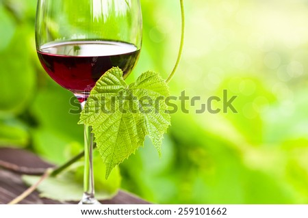The  glass with red wine in vineyard. - stock photo
