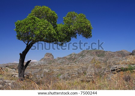 The Grand Canyon of Madagascar Isalo National Park and a tree growing sideways in the prevailing wind