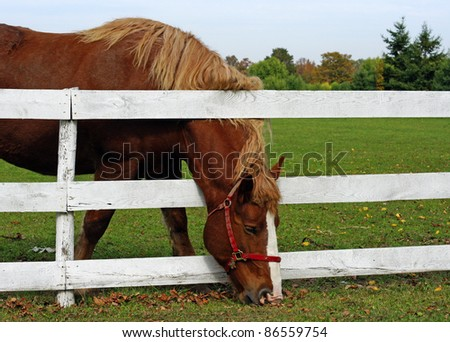 The grass is always greener on the other side of the fence - stock photo