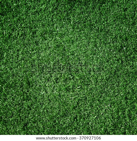 The grass is green, small, close-up. Background - stock photo