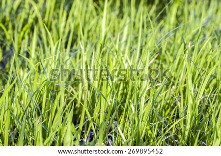 The grass (Shallow Dof) - stock photo