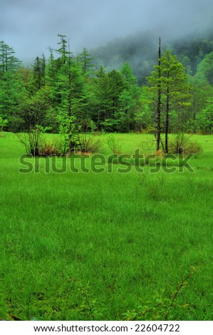 The grassy plain of the fresh green(HDR)	 - stock photo