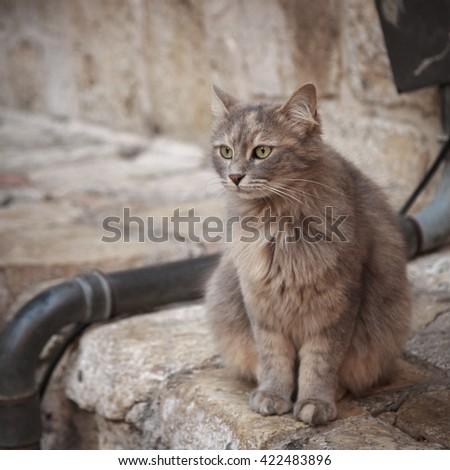 The gray cat  sitting on  street in Jerusalem - stock photo