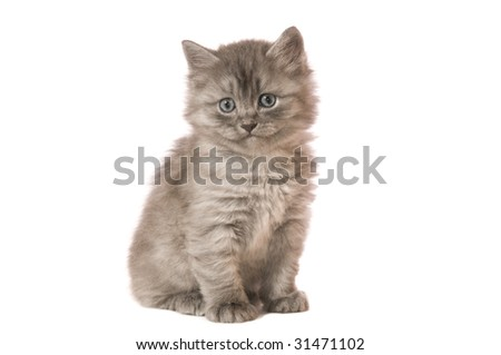 The gray fluffy kitten sits on a camera on white backgroud isolated