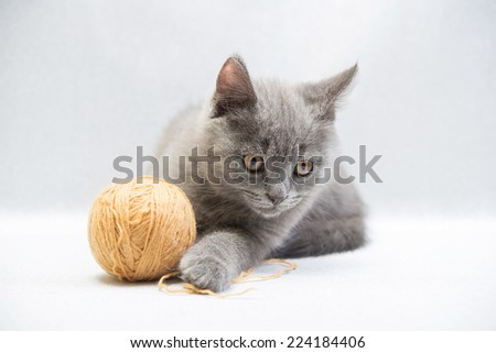 The gray kitten plays on a light gray background - stock photo