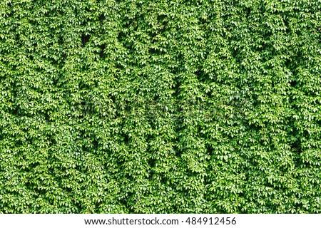 Green Wall Stock Photo 102548462 Shutterstock
