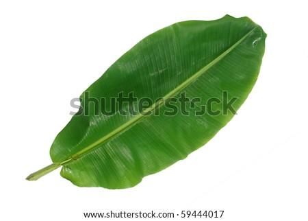 the green banana leaf - stock photo