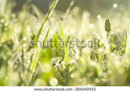 the green blur background from a grass on a lawn