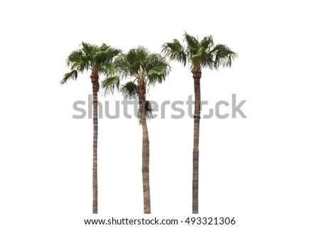 The green coconut tree isolated white background