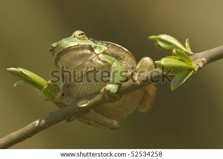 The green frog - stock photo