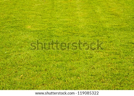 The green grass has faded black vertical lines - stock photo