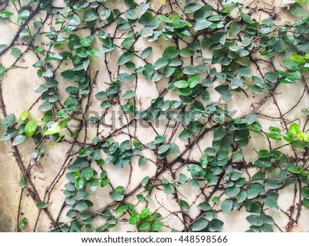 The green grass on the white wall. - stock photo