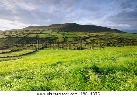 the green hill - stock photo
