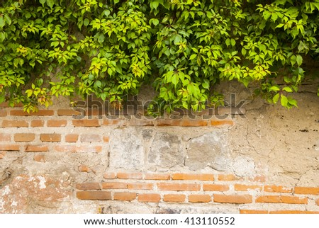The green ivy on a stone wall, a beautiful background. Antigua Guatemala