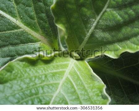 The Green leafs - stock photo