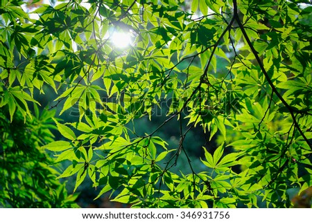 the green leaves on the tree with the sunshine - stock photo