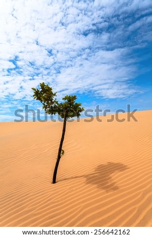 The green tree in the sand dunes of the desert - stock photo